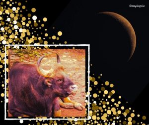 NEW MOON IN TAURUS 4TH MAY 2019   My Sky Pie